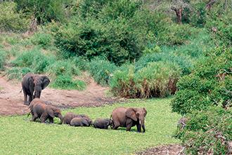 Фото №3 - Слонопотамия. 13 фотоисторий из жизни слонов