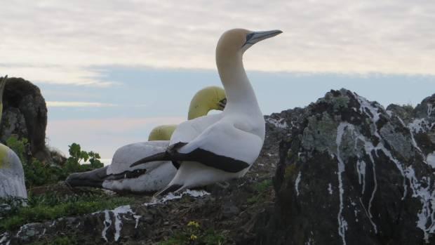 Фото №2 - Самая одинокая олуша умерла в попытках добиться любви бетонной статуи