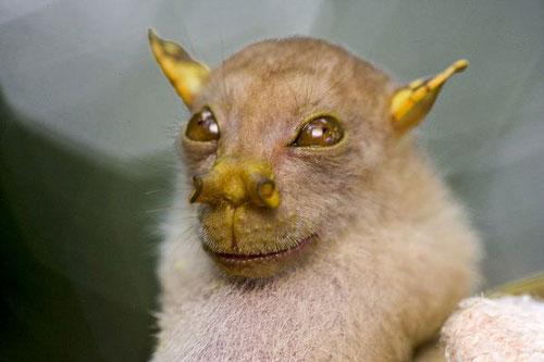 Фото №3 - Десятка самых странных животных - 2010