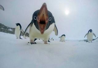 25 неизвестных фактов об Антарктике