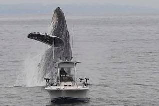 Гигантский кит вдруг выпрыгнул из воды возле ни о чем не подозревающего рыбака (эпичное видео)