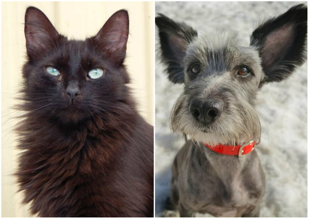 Фото №1 - Котопёс недели: возьми из приюта кота Блэка или собаку Нюсю