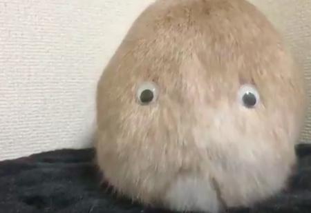 Японец приделал кролику глаза на задницу, и получился самый милый монстр в Интернете (ВИДЕО)