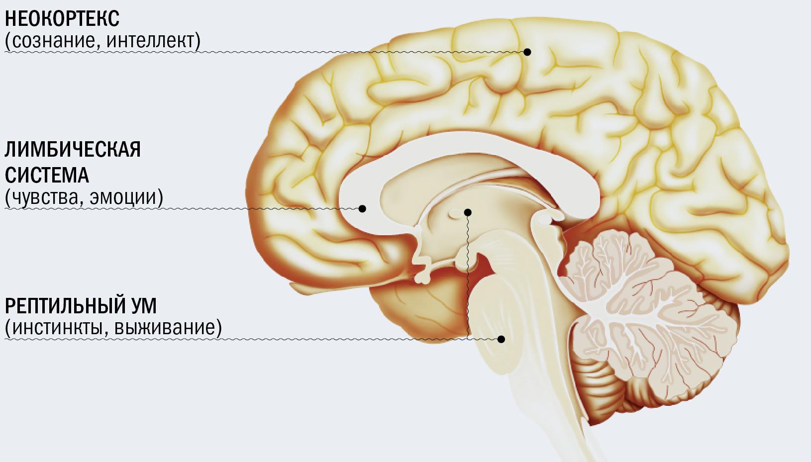 Попыталась Высосать Мозг Через Член