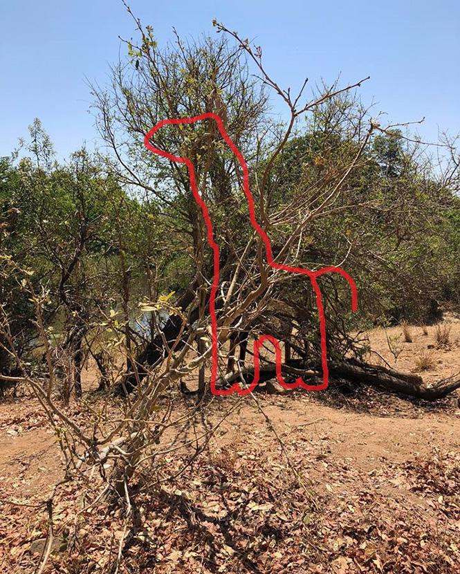 Фото №3 - Найди на фото жирафа: новая оптическая иллюзия