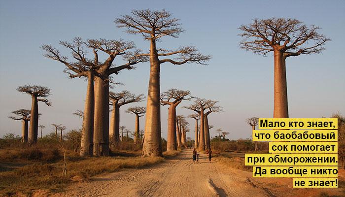 Фото №1 - Идеи для отпуска: Аллея баобабов, Мадагаскар