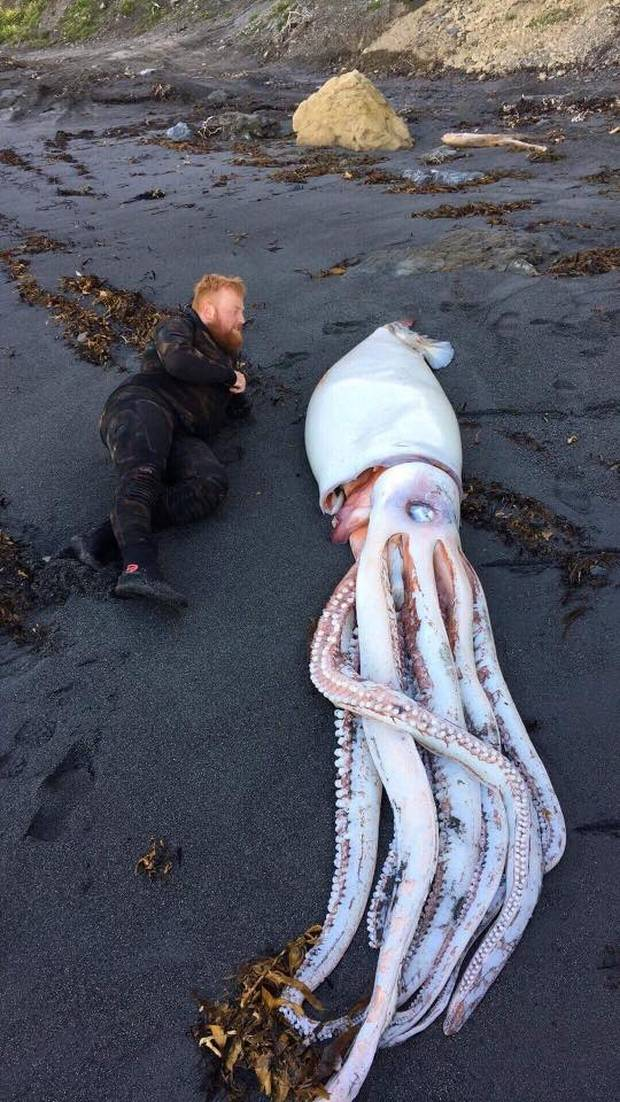 Фото №2 - На берег Новой Зеландии выбросилось гигантское чудище морское