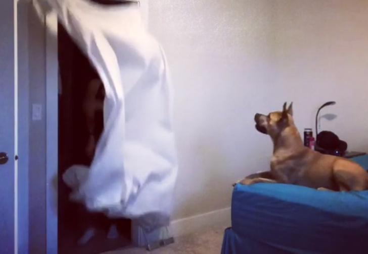 Фото №1 - Простой, но суперэффектный флешмоб «Разыграй свою собаку!» — ВИДЕО