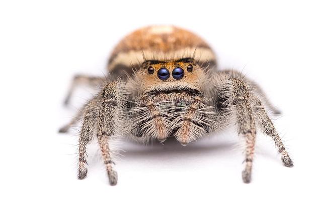 Фото №1 - Как дрессировать паука (ВИДЕО)