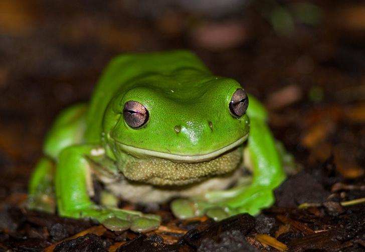 Фото №8 - 20 лучших фото жаб всех времен и народов!
