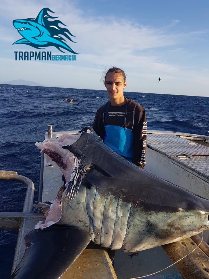Фото №2 - Австралийский рыбак выловил голову огромной акулы, которую, похоже, сожрало нечто еще большего размера