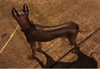 Свежая оптическая иллюзия: собака или статуя?