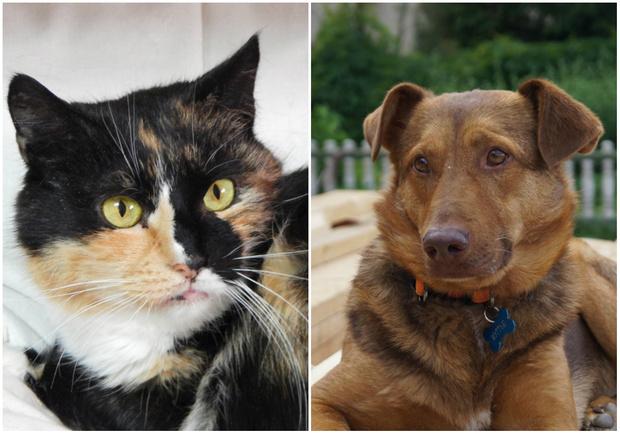 Фото №1 - Котопёс недели: возьми из приюта трехцветную кошку Дикси или нежнейшего пса Мэттью