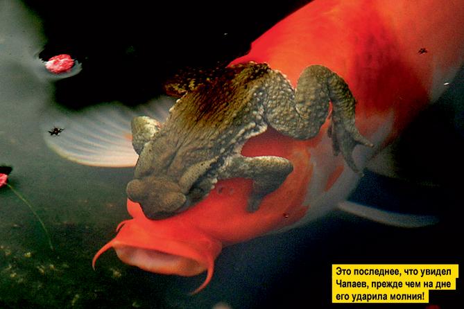 Фото №12 - Переполох в бестиарии: 10 неожиданных фотографий животных с историями