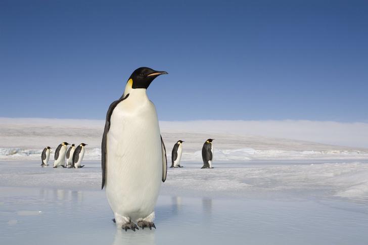 Фото №3 - Головоломка дня: найди пингвина на этой картинке