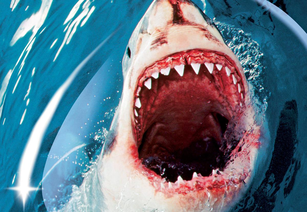 тематичные картинки про акул свет подразумевает