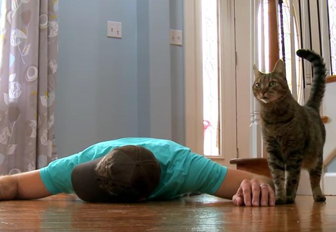 Вот как кот реагирует на «смерть» хозяина. Бессердечное ВИДЕО