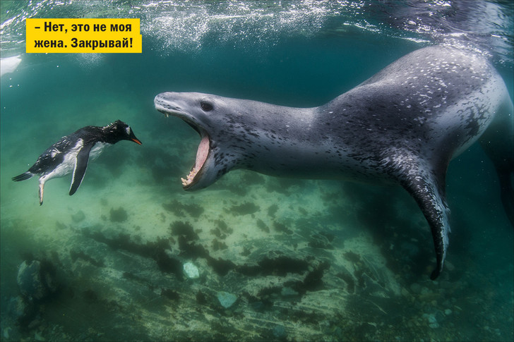 Фото №6 - «Золотой сы-ы-ыр»: лучшие фотографии 2016 года!