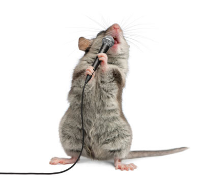 Шумелка-мышь