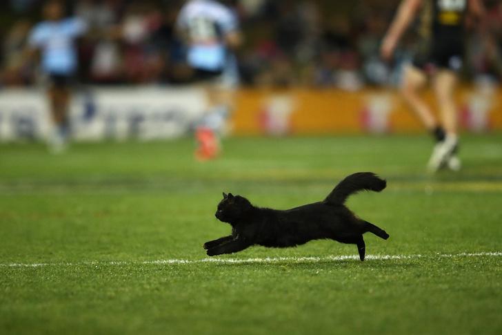 Фото №3 - Шикарный черный кот стал главной звездой регбийного матча