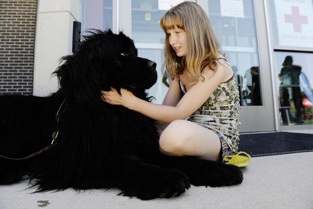 Фото №2 - Псыхология: краткая история дружбы собак и людей