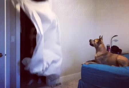 Простой, но суперэффектный флешмоб «Разыграй свою собаку!» — ВИДЕО