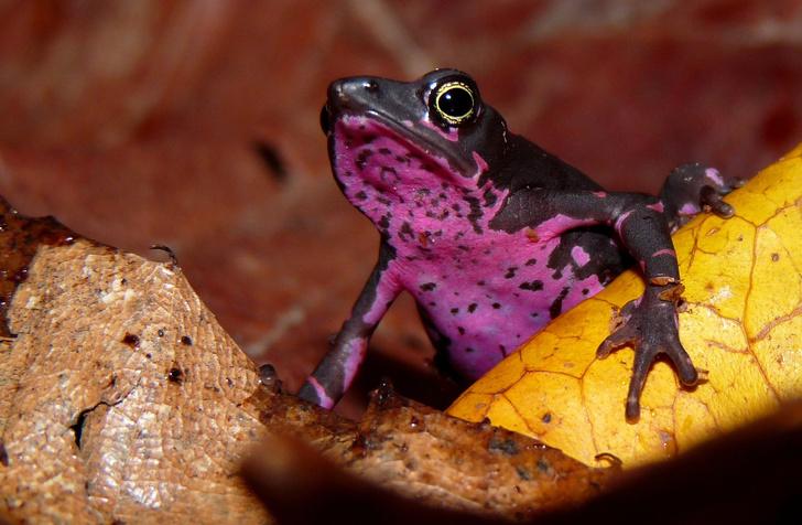 Фото №12 - 20 лучших фото жаб всех времен и народов!