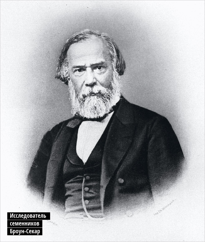 Исследователь семенников Броун-Секар