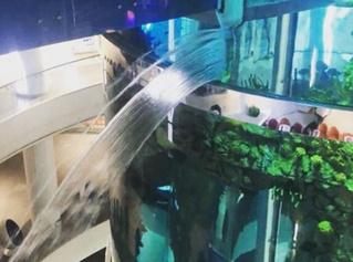 В столичном торговом центре треснул аквариум объемом больше миллиона литров (видео)