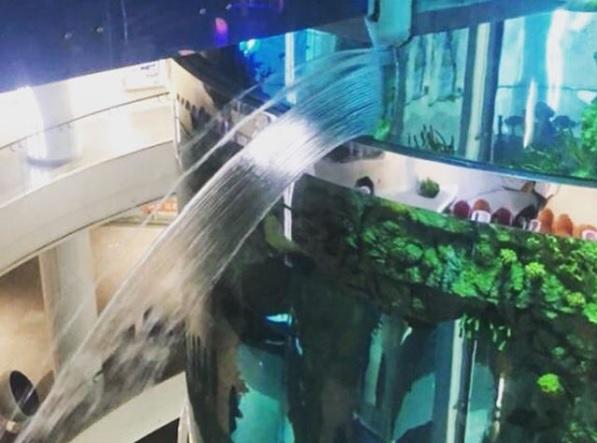Фото №1 - В столичном торговом центре треснул аквариум объемом больше миллиона литров (видео)