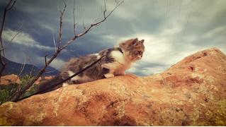 Новая страсть Интернета: турпоходы котов (видео)