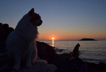 Открыта вакансия заклинателя котов на острове