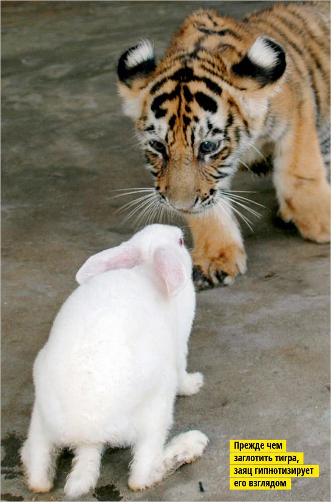 Фото №1 - Устроили из зоопарка цирк!