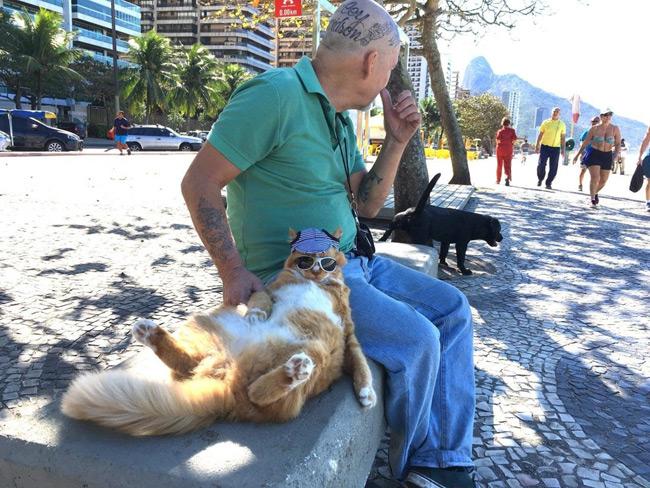 Фото №1 - Балдеющий кот — новый король фотожаб!