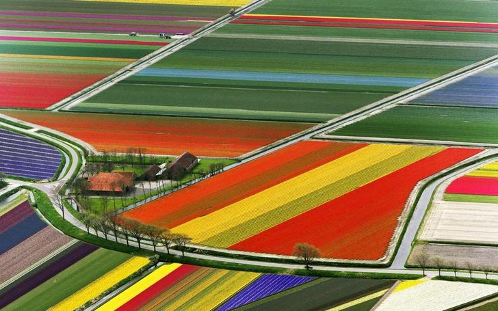 Тюльпановые поля в Нидерландах. XXI век