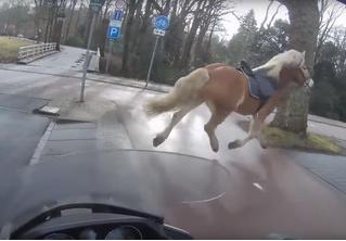 Байкер лихо помог женщине догнать сбежавшую лошадь (ВИДЕО)
