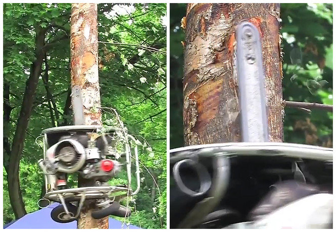 Бензопила сама лезет на дерево и пилит ветки