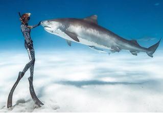 Девушки и акулы: фотографии Хуана Олифанта