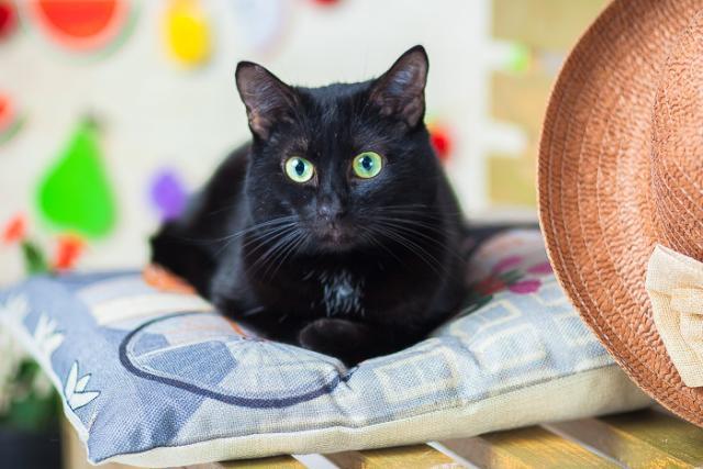 Фото №2 - Котопёс недели: возьми из приюта пса Арона или кота Марека