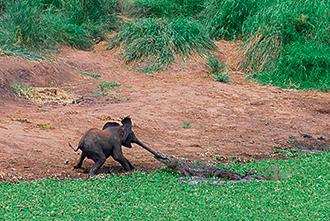 Фото №4 - Слонопотамия. 13 фотоисторий из жизни слонов