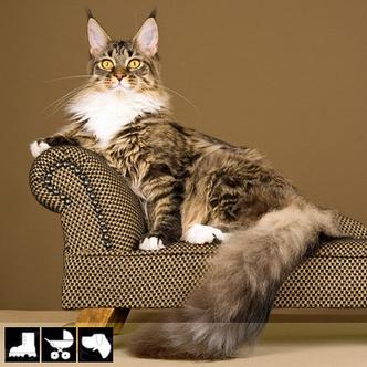 Фото №8 - Как выбрать домашнее животное в зависимости от типа твоего характера и размеров жилплощади