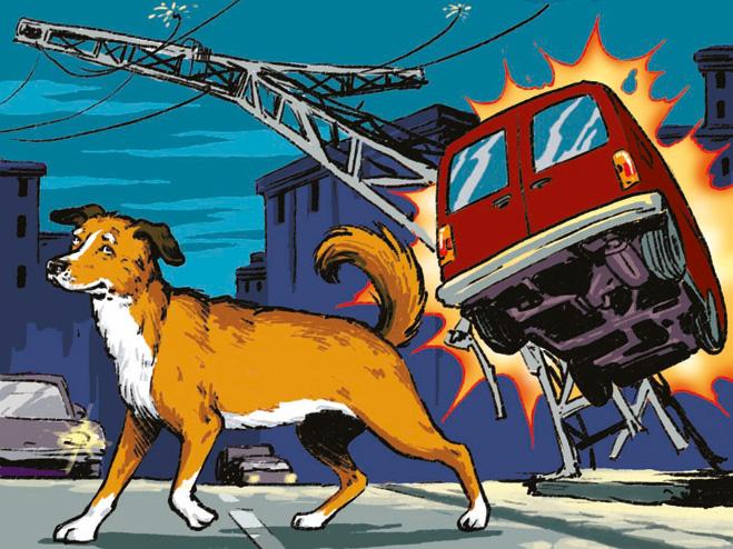 Собака лишила энергии часть Иркутска