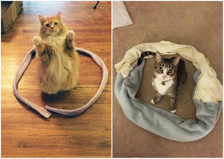 Фото №1 - Кот обязательно сядет в круг! Попробуй на своем коте