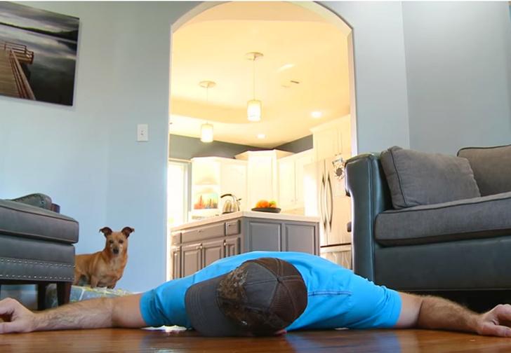 Фото №1 - Вот как собака реагирует на «смерть» хозяина. Душераздирающее ВИДЕО