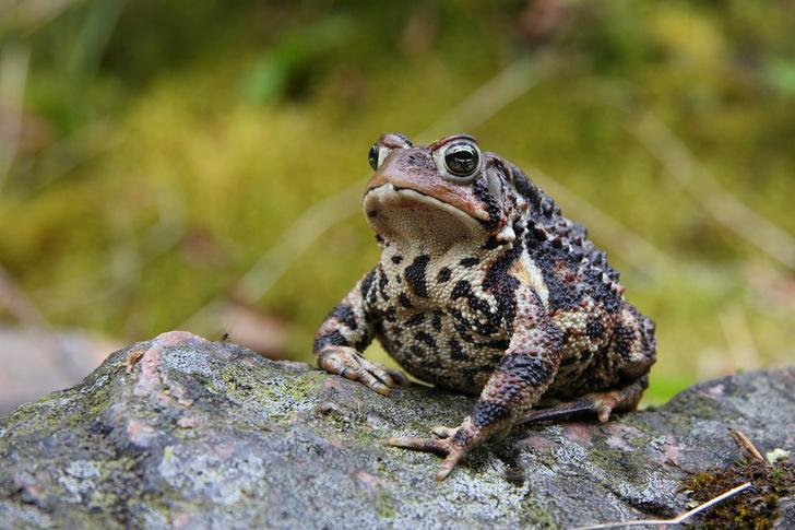 Фото №2 - 20 лучших фото жаб всех времен и народов!