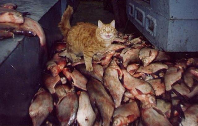 Фото №4 - 5 героических котов современности