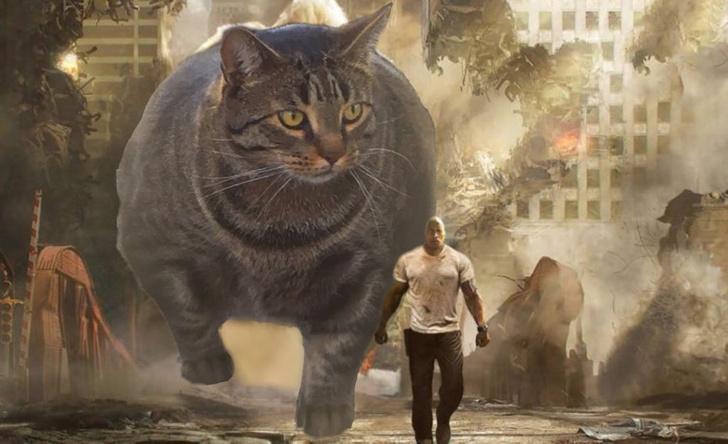 Фото №1 - Лучшие фотожабы на кота-бодибилдера!