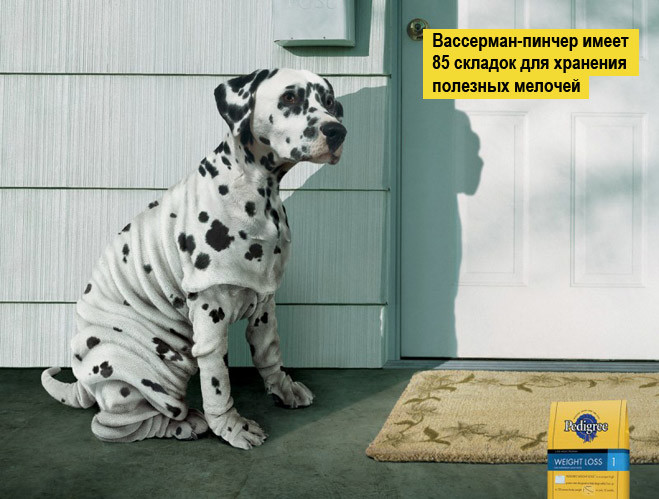 14 самых смешных реклам на тему ожирения и похудения