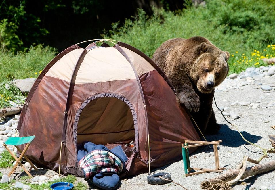варианты забавные картинки про отдых на природе при правильном подборе