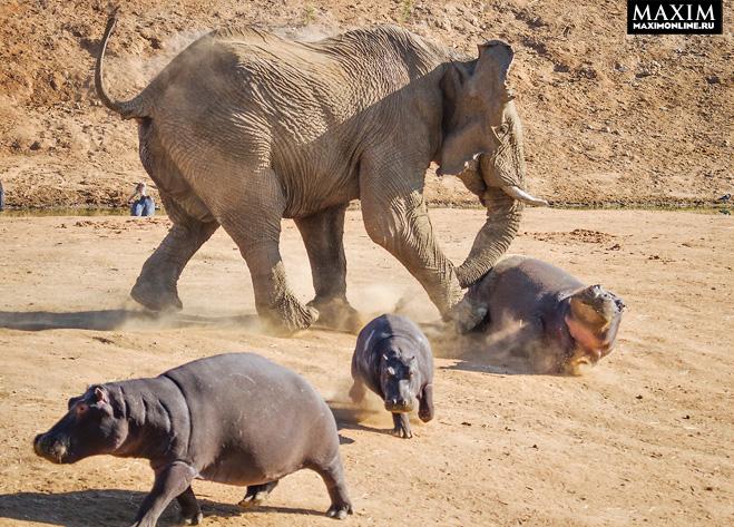 Фото №3 - Фото месяца: слоны без правил